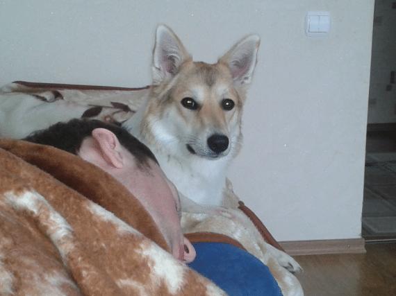 Наша собака Хати